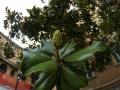 Bolońska flora