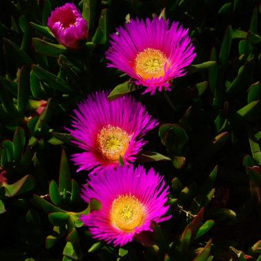 Kwiaty między pomiędzy, Malta
