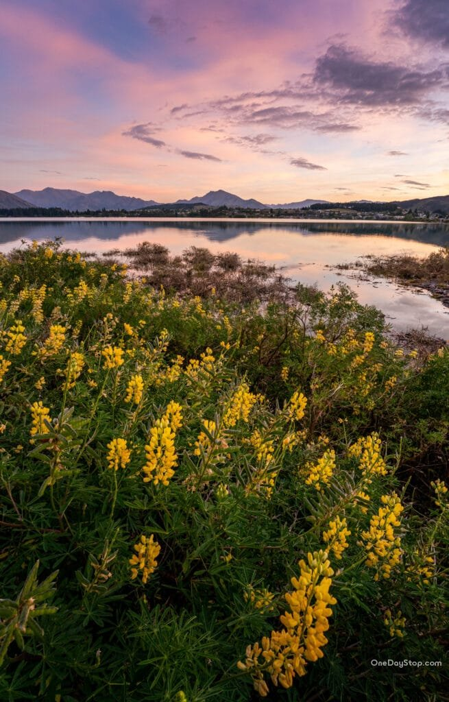 Wanaka - widok na jezioro