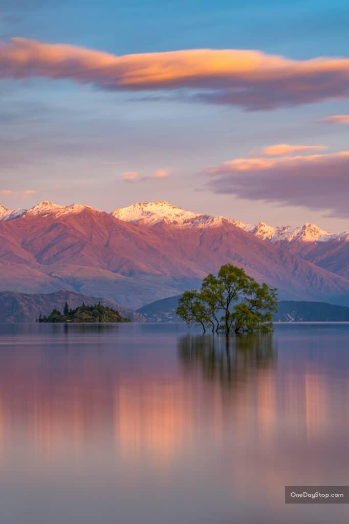 Wanaka - Nowa Zelandia - słynne drzewo